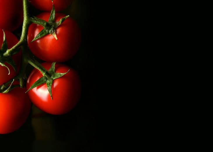 How to grow greenhouse hydroponic tomatoes