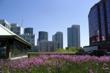 Green roof on MEC building