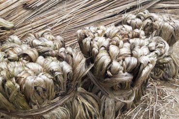 Jute fibres - Jute