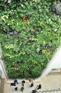 Looking up at a living wall