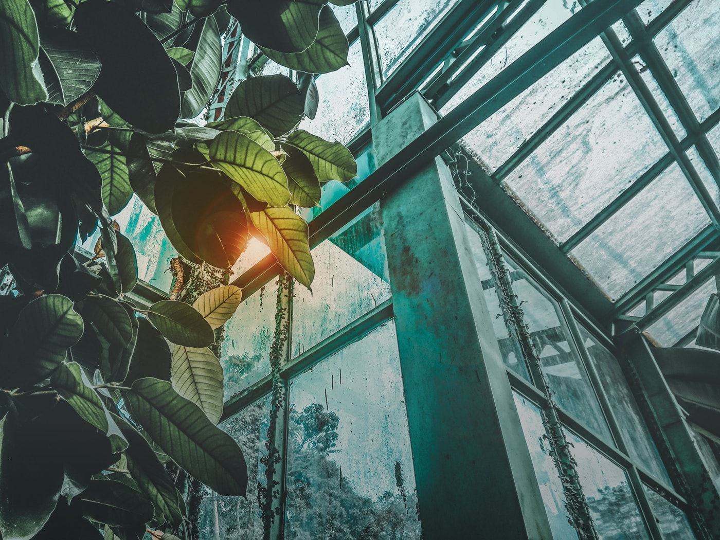 greenhouse glass and plant - types of greenhouse glass