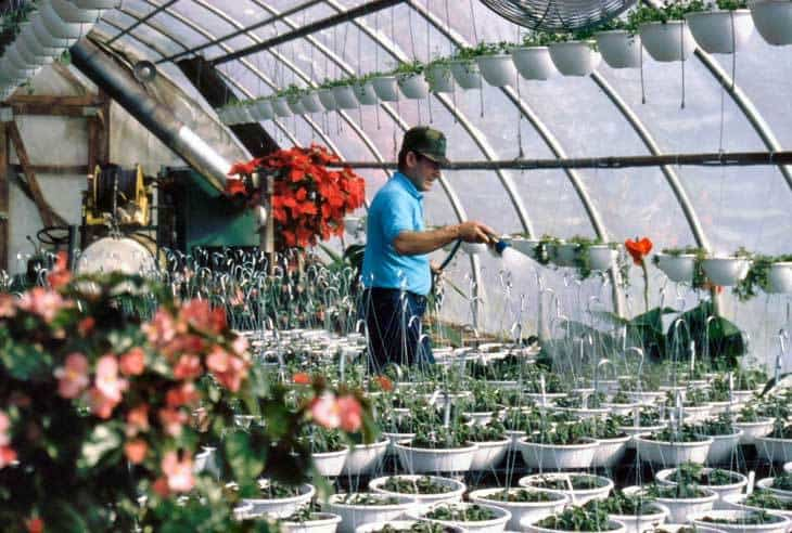 Learn All About Lean-to Greenhouses