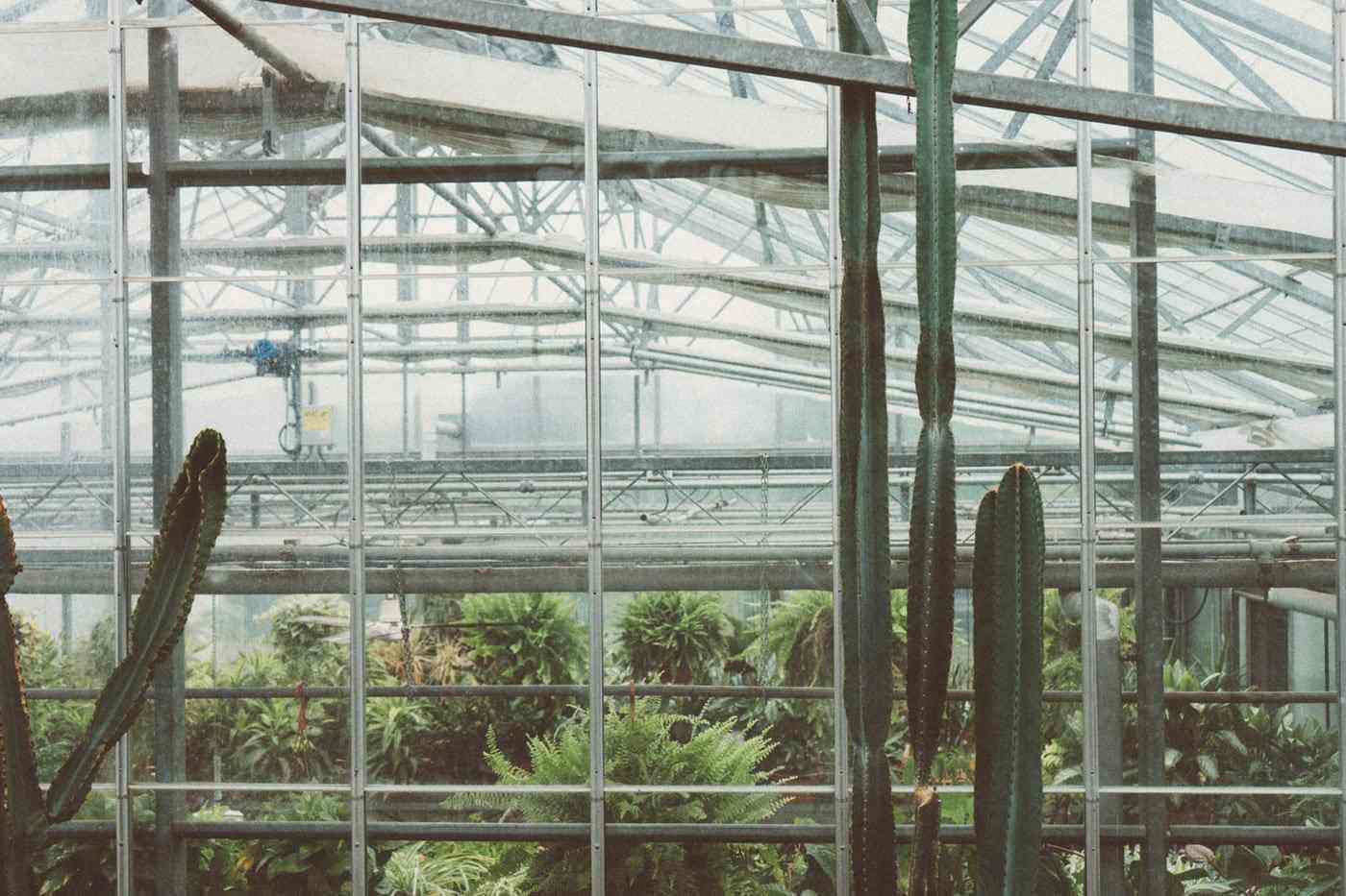 cactus in greenhouse - types of greenhouse glass