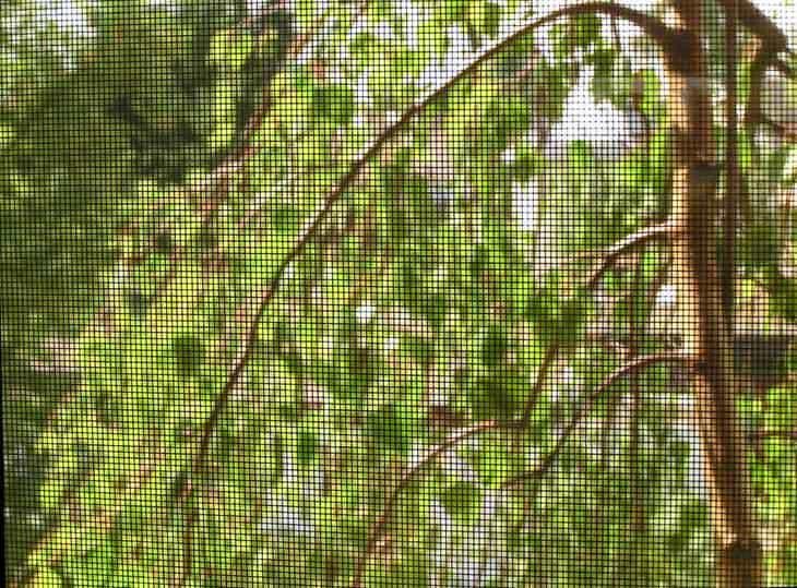 A screen around plants