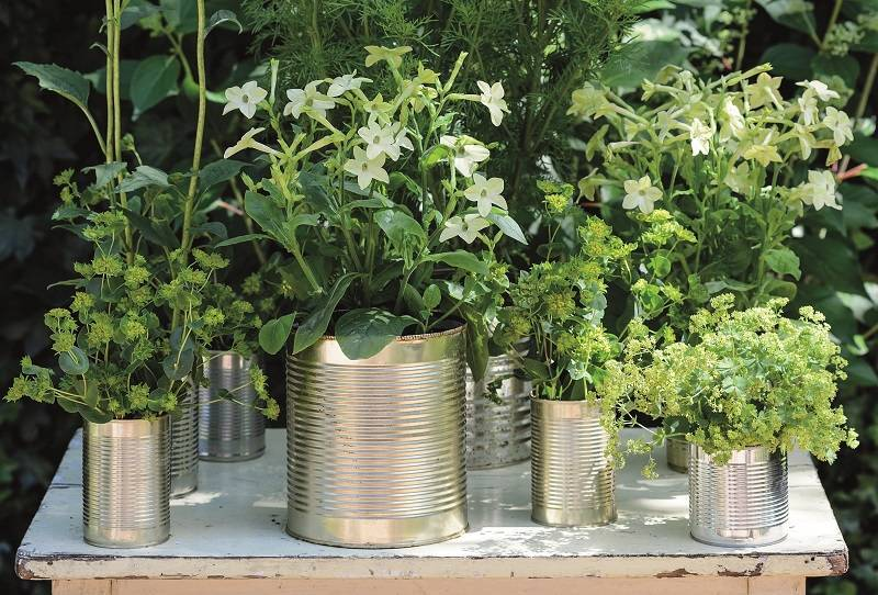 Finished tin cans with plants in them displayed on table - Upcycled tin can display