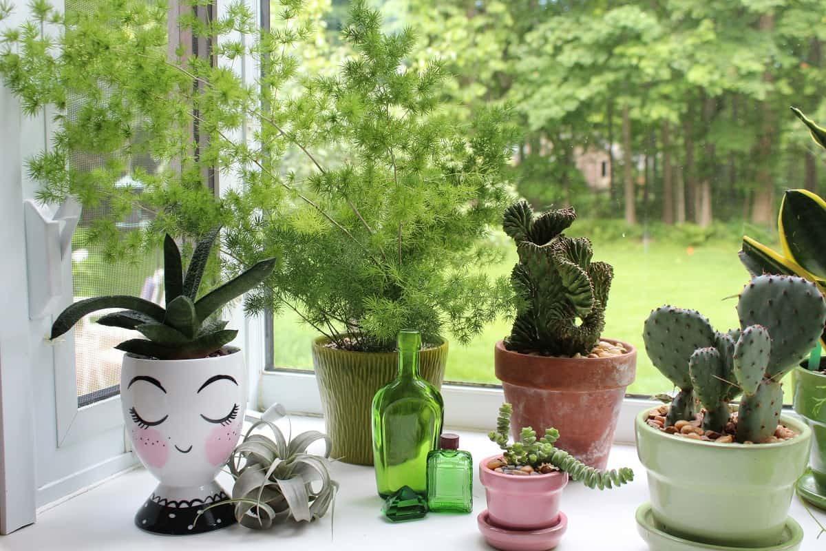 Group of plants in front of garden window - Want to grow healthy plants?