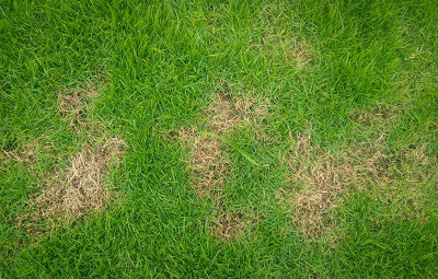 Lawn with brown patches - Organic lawn care troubleshooting