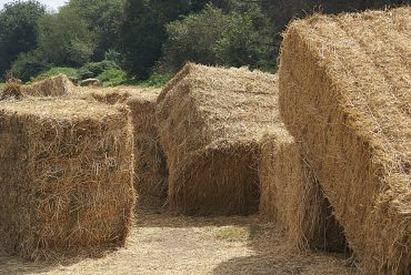 Straw bales on ground - A 2-storey load-bearing straw bale house built by women