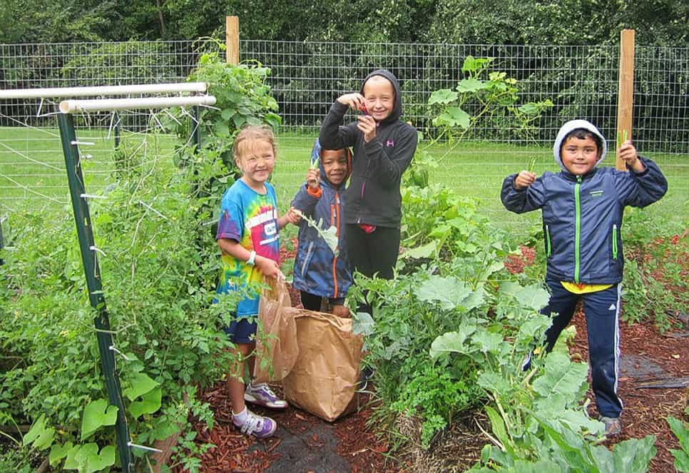 Four kids working in straw bale garden - Schoolyard garden