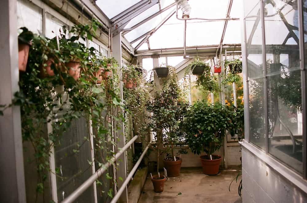 Hanging and standing potted plants in glass greenhouse - Ever wondered what it's like to live inside a greenhouse?