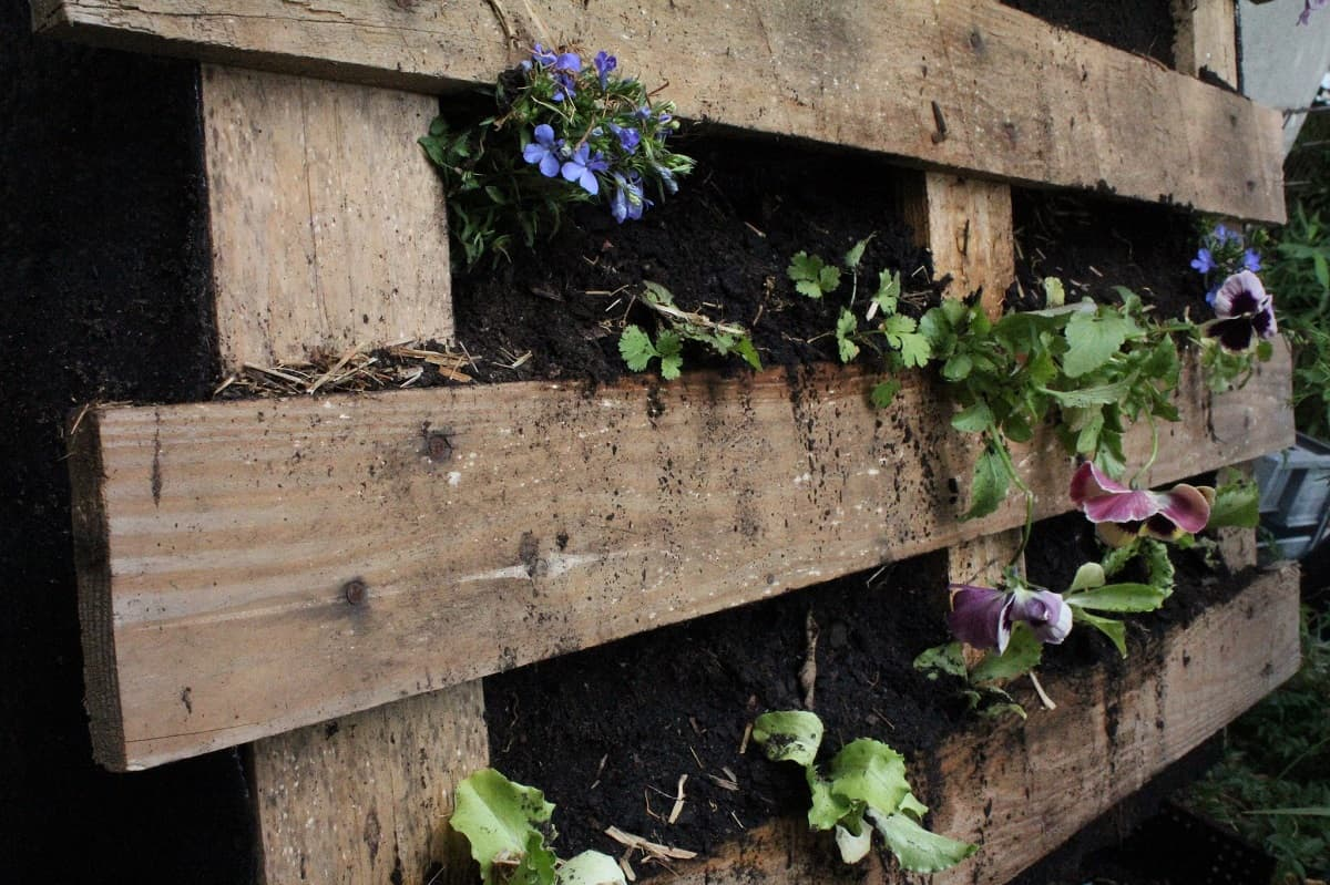 Vertical garden made from a pallet - Build your own vertical garden in 6 steps
