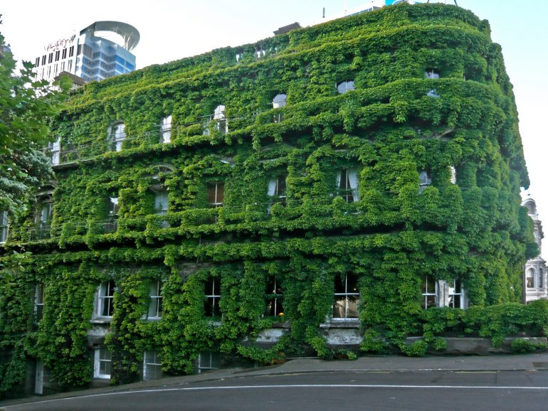 Building in Auckland with green vegetation growing on front - Advantages and disadvantages of green buildings for owners and tenants