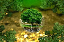 Small tree in cracked circle of glass - 5 traditional practices that are getting in the way of green living