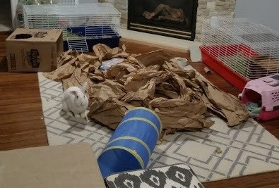 Rabbit playing with packing paper - 11 ways to make pet toys out of old junk
