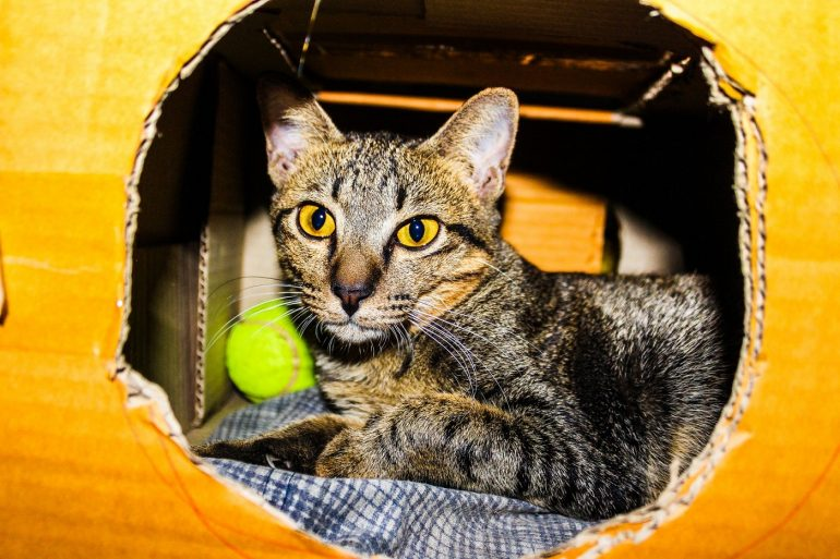 Cat in cardboard box with round hole cut in it - 11 ways to make pet toys out of old junk