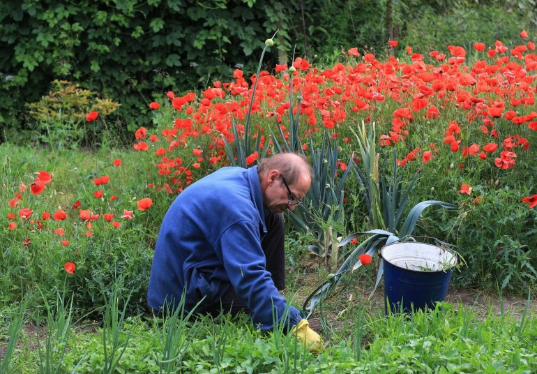 Man manually weeding garden - 6 tips for ridding your yard of weeds naturally