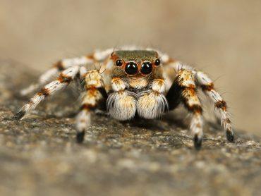 Large crawling spider. Photo via Pixabay.