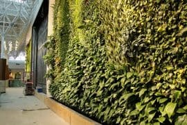 Green wall at Guildford Mall in Surrey, BC, Canada