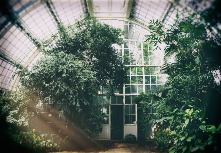 Greenhouse with clear glass walls. Image from Philipp Deus via Pexels.