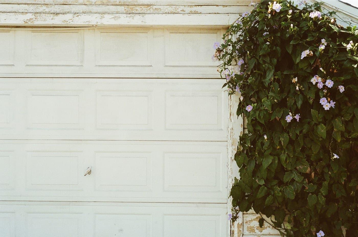 Garage door with plant beside it. Photo from Jaymantri via Pexels.