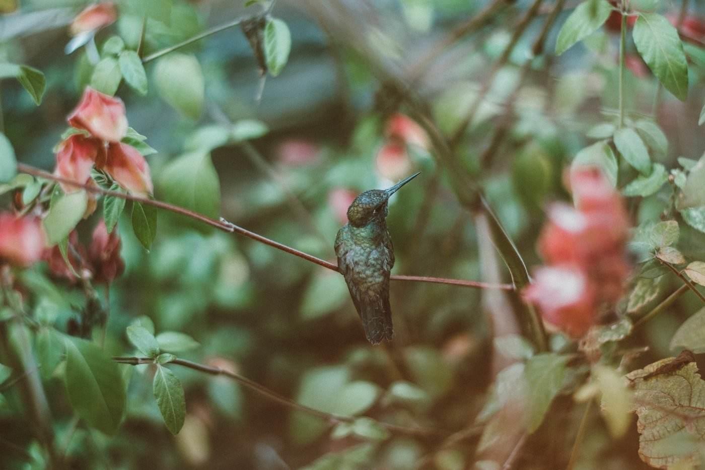hummingbird in tree - how to attract wildlife to your garden