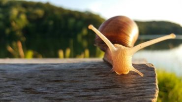 snail on log by lake - natural ways to get rid of snails