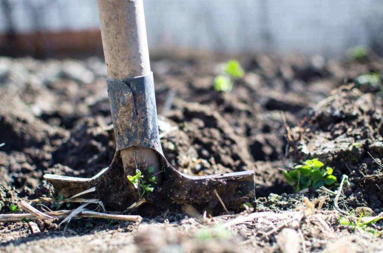 close-up of shovel digging for backyard renovations